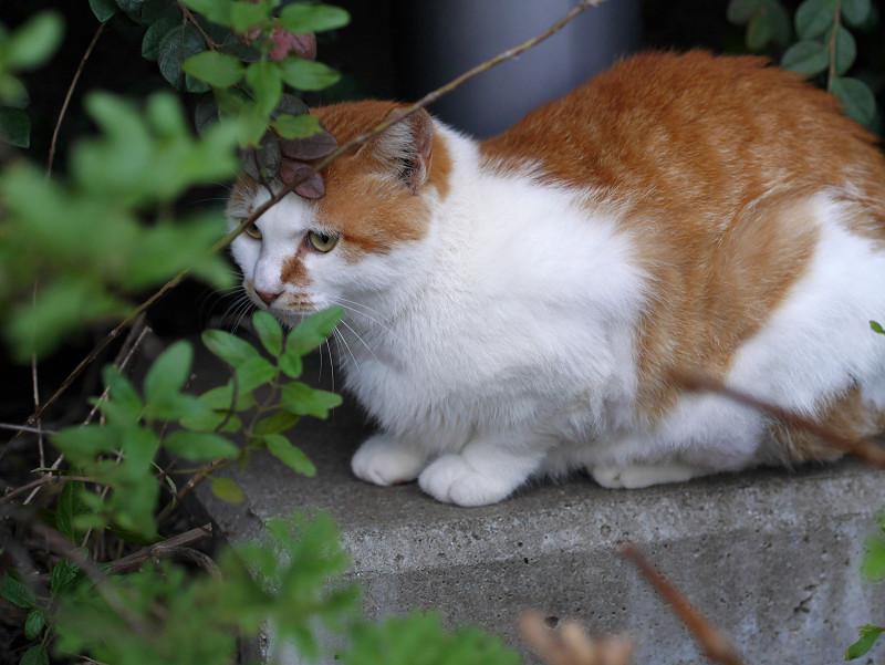 公園草むらの猫2