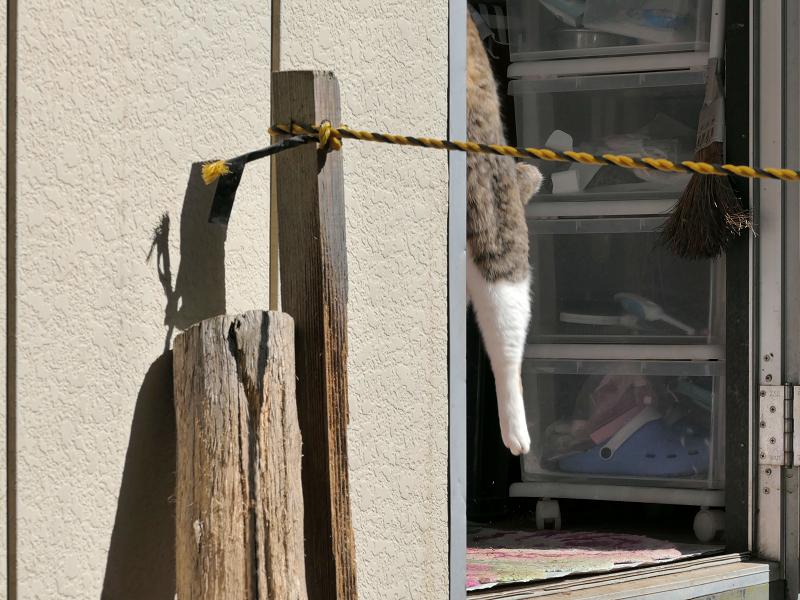簡易ハウスから見ている猫3