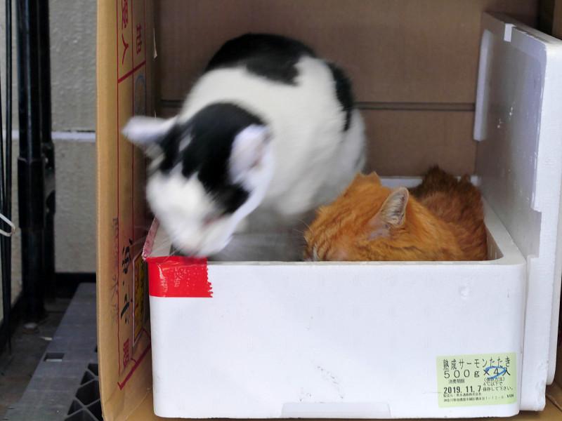 ハウスの中の猫たち2