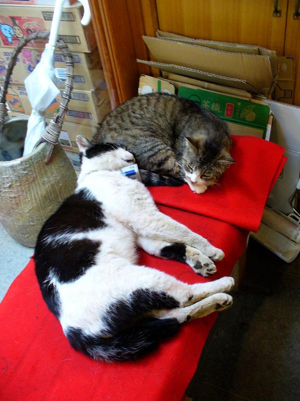 店内赤い緋毛氈と猫1