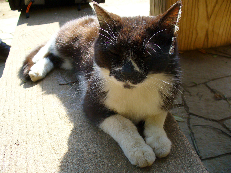 足元に座った黒白猫1