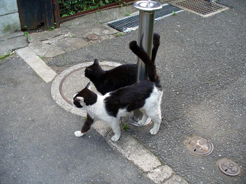 通りまで出て来た猫たち1