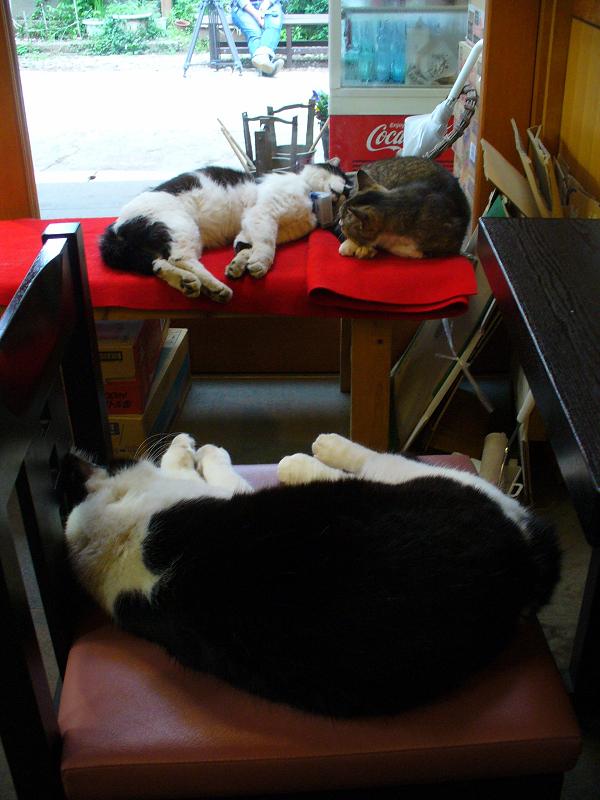 店内赤い緋毛氈と猫