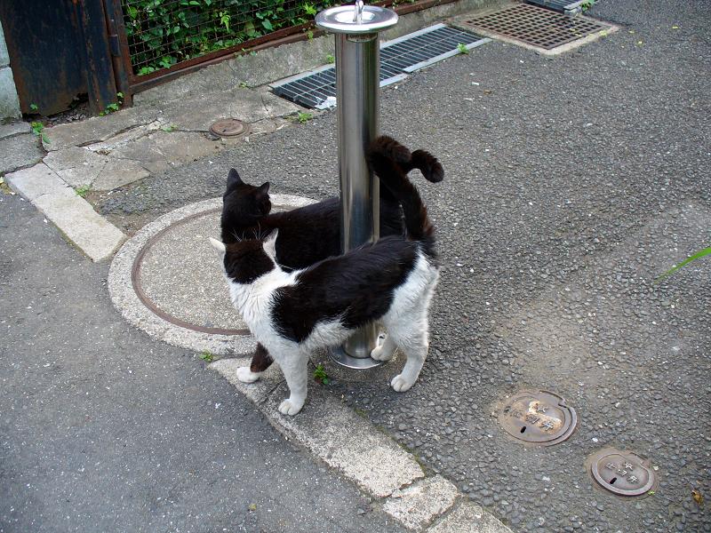 通りまで出て来た猫たち2