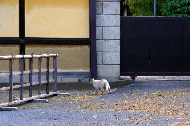 町なかを移動する猫2