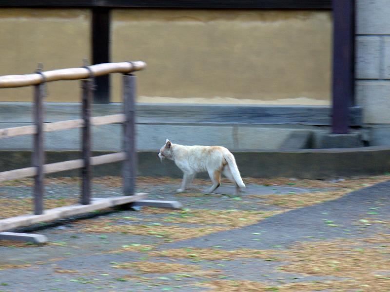 町なかを移動する猫3