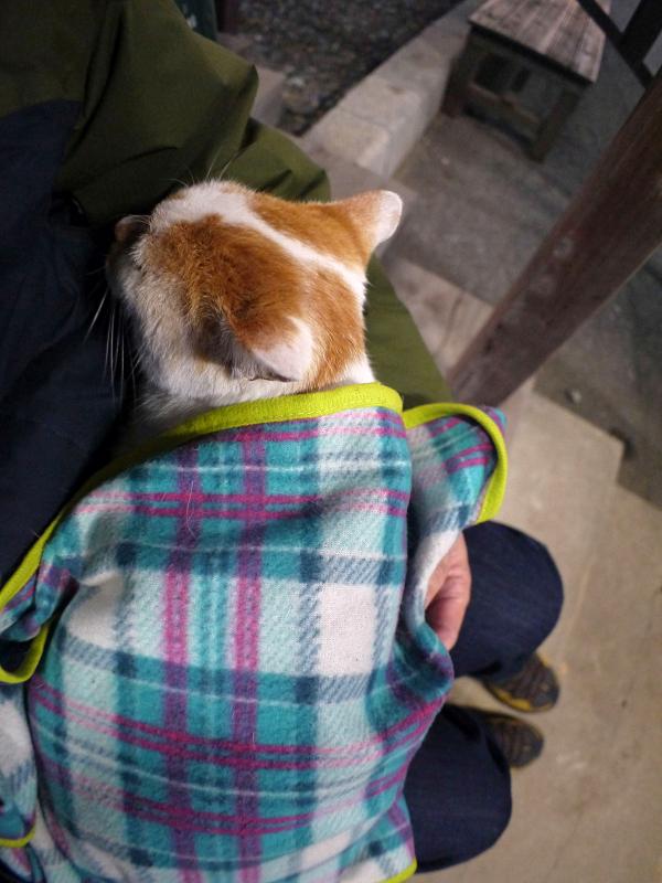 毛布に包まって寝ている茶白猫1