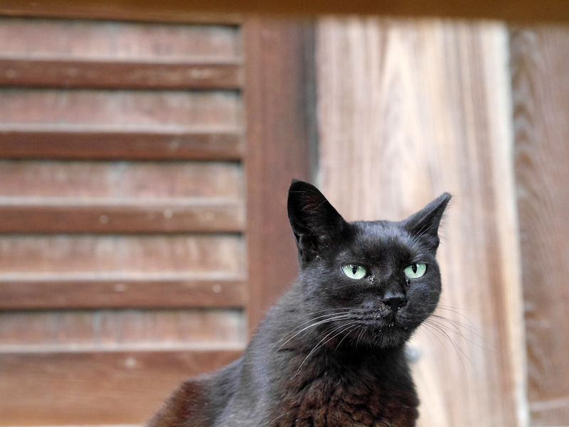 濡れ縁の黒猫1