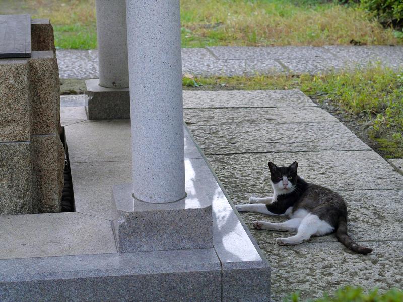 井戸の横の黒白猫1