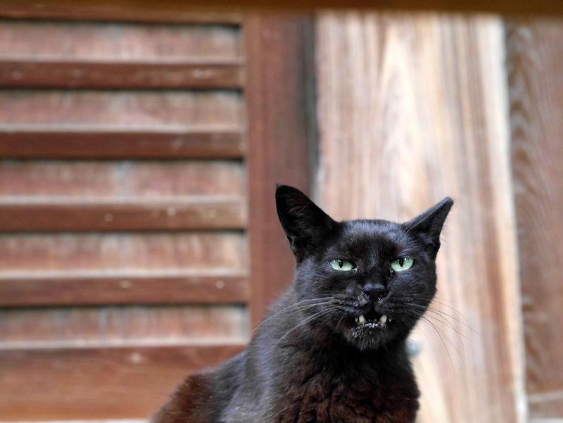 濡れ縁の黒猫2