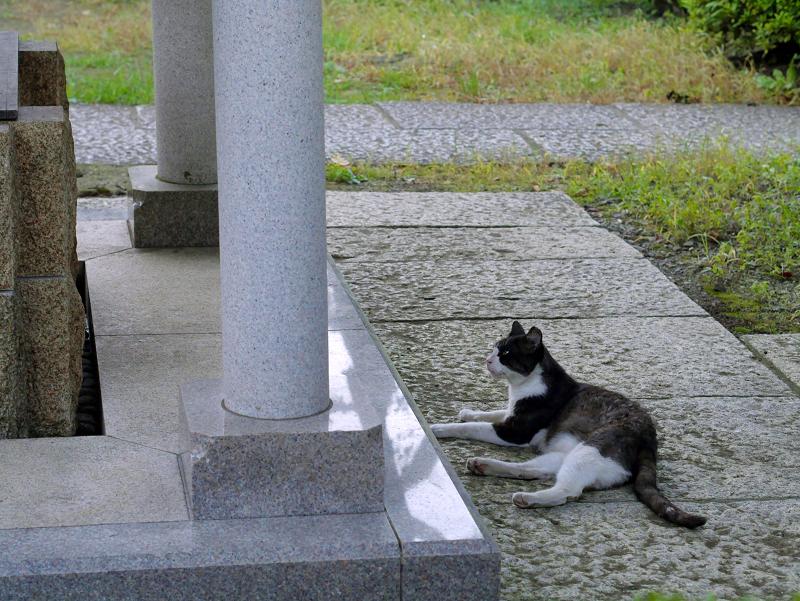 井戸の横の黒白猫2