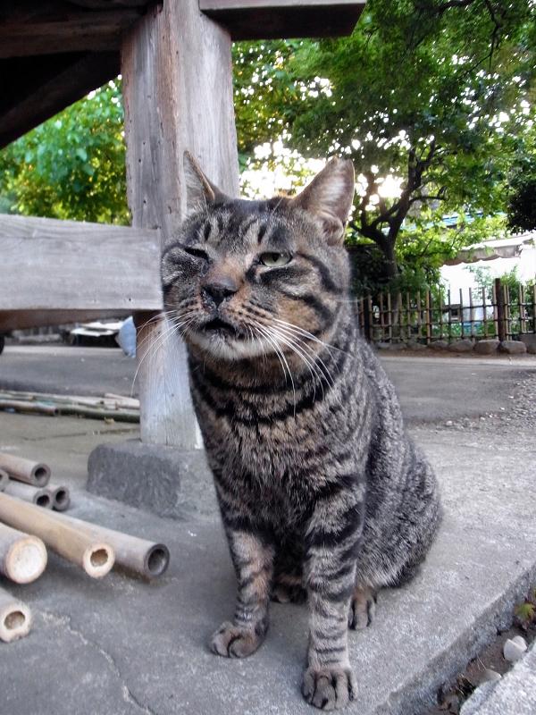 お堂の脇のキジトラ猫
