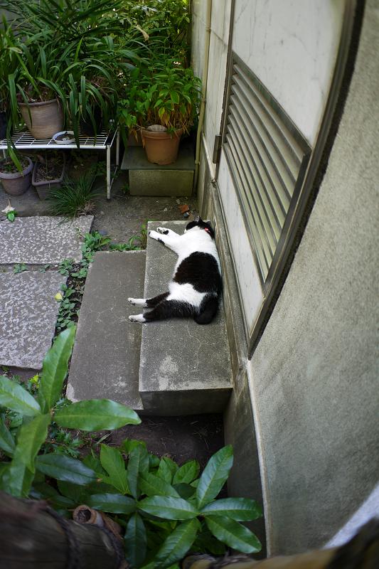 階段で寝ている白黒猫1