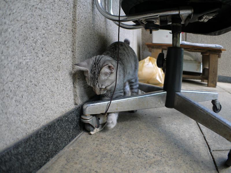 椅子の下で遊ぶサバトラ仔猫1