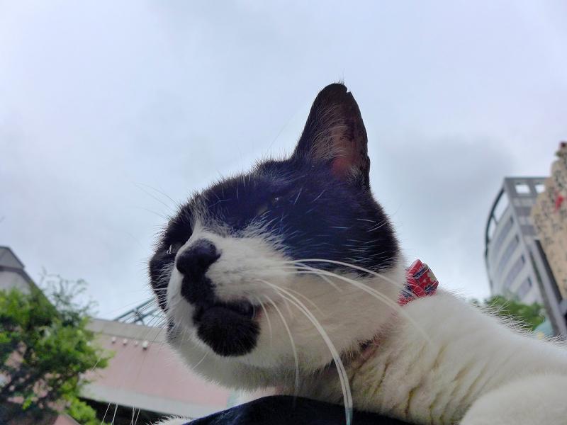 ユニークなアゴ柄の白黒猫1