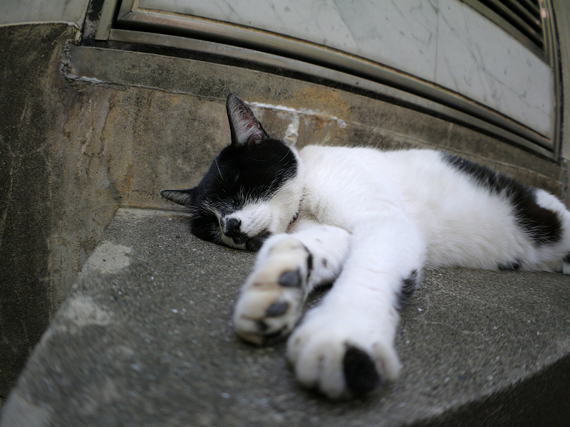 階段で寝ている白黒猫2