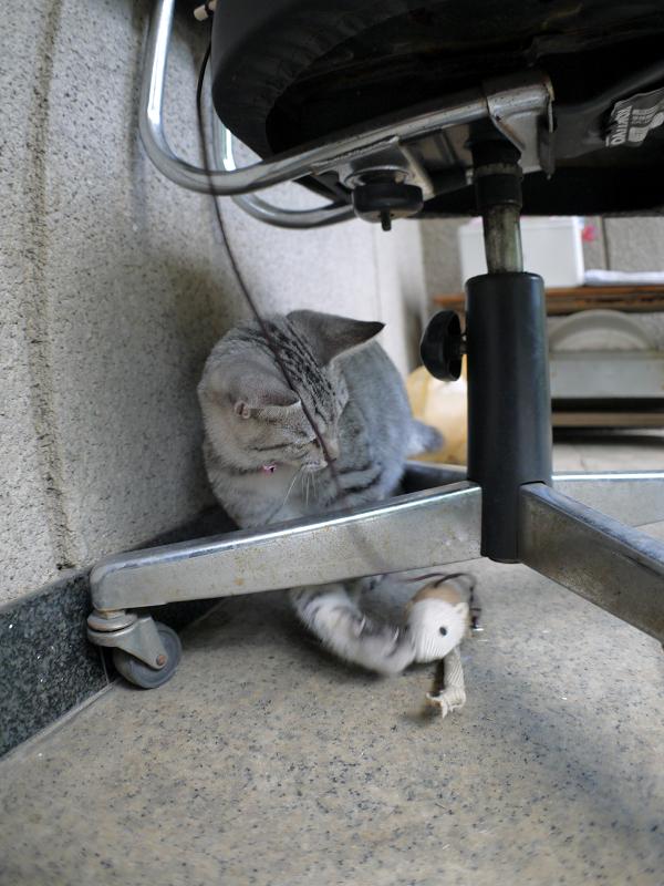 椅子の下で遊ぶサバトラ仔猫2