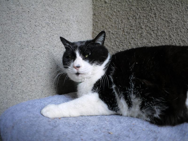片隅でタオルの上で寝ている黒白猫2
