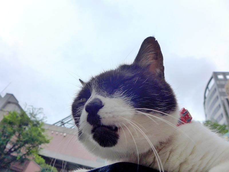 ユニークなアゴ柄の白黒猫2