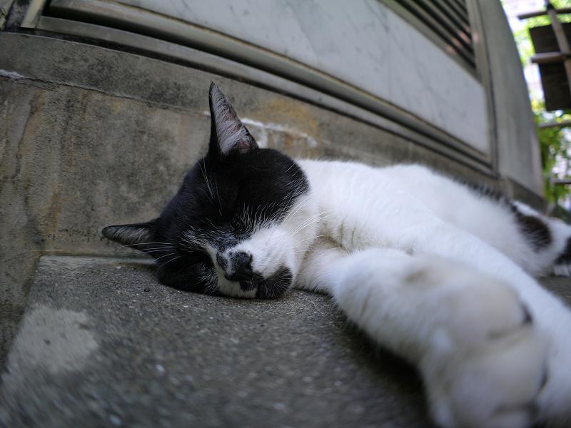 階段で寝ている白黒猫3