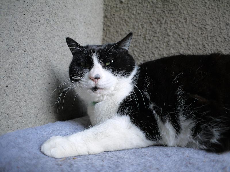 片隅でタオルの上で寝ている黒白猫3