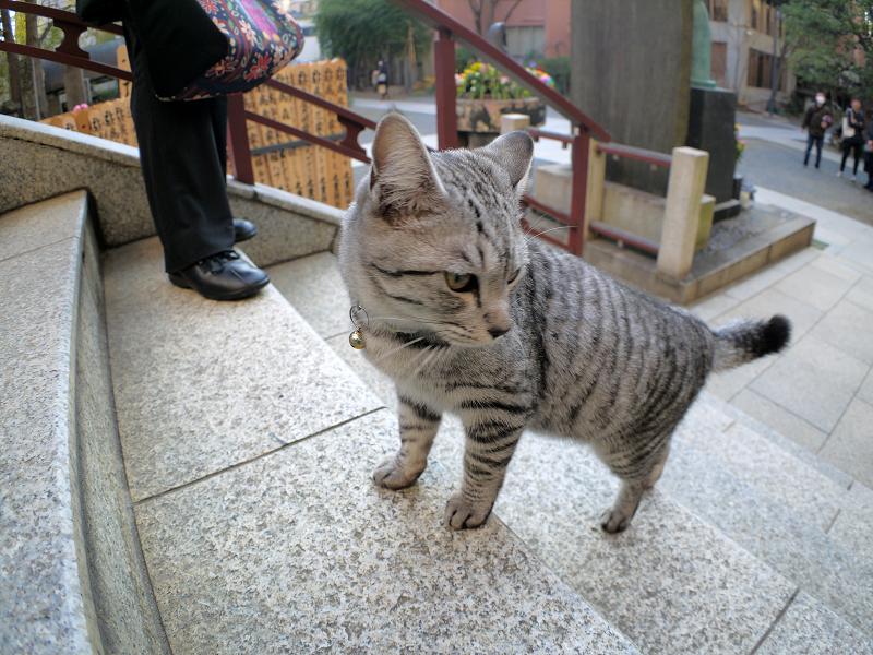 階段を駆け上がるサバトラ猫3
