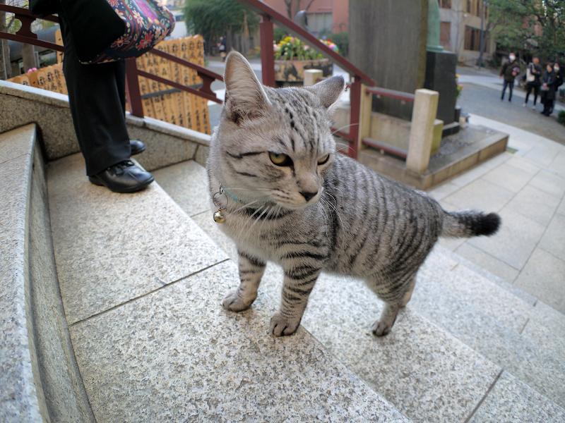 階段を駆け上がるサバトラ猫4