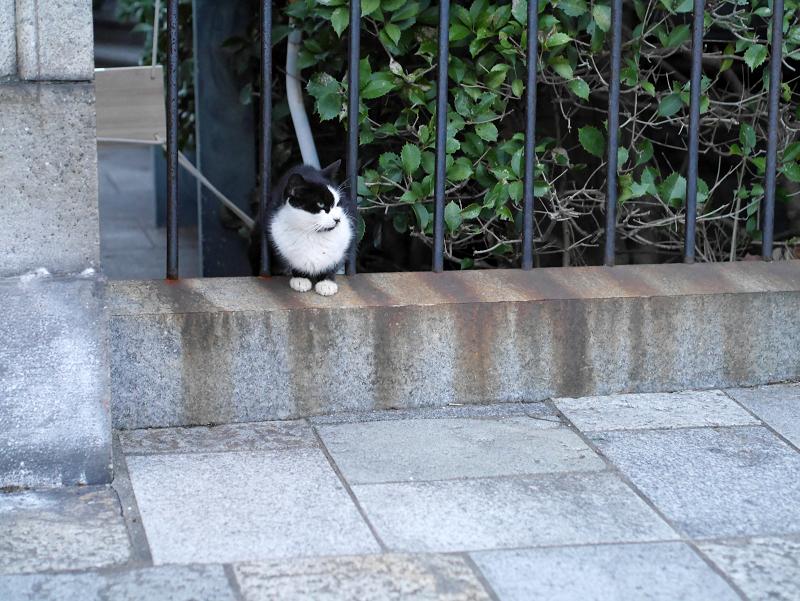 公園の柵にいた黒白猫1