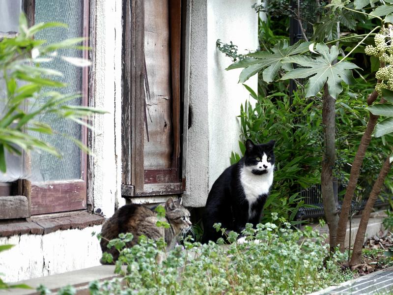 公園の外れの猫たち