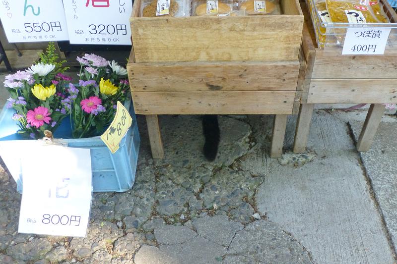 テーブルの下の黒猫