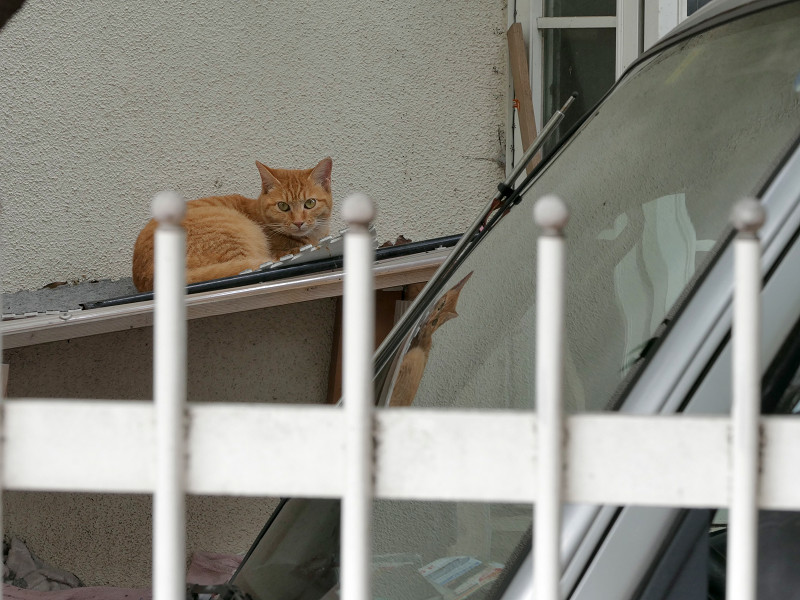 窓枠の横から見ている茶トラ猫