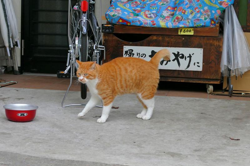餌皿の前の茶白猫2