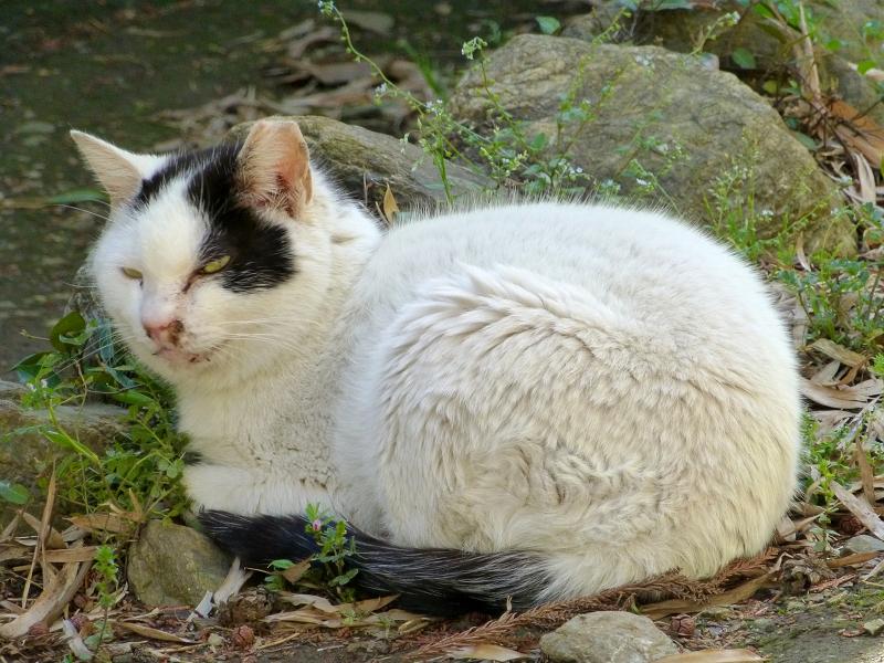 丸い体型の猫2