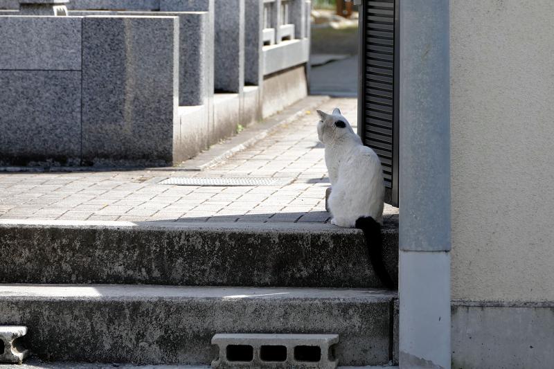 墓苑入口白黒猫1