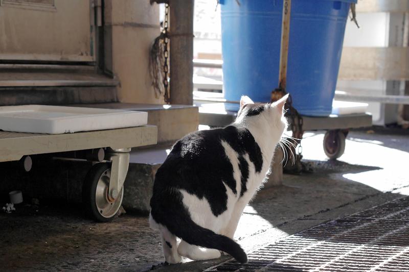 陽射しを浴びて座る白黒猫2