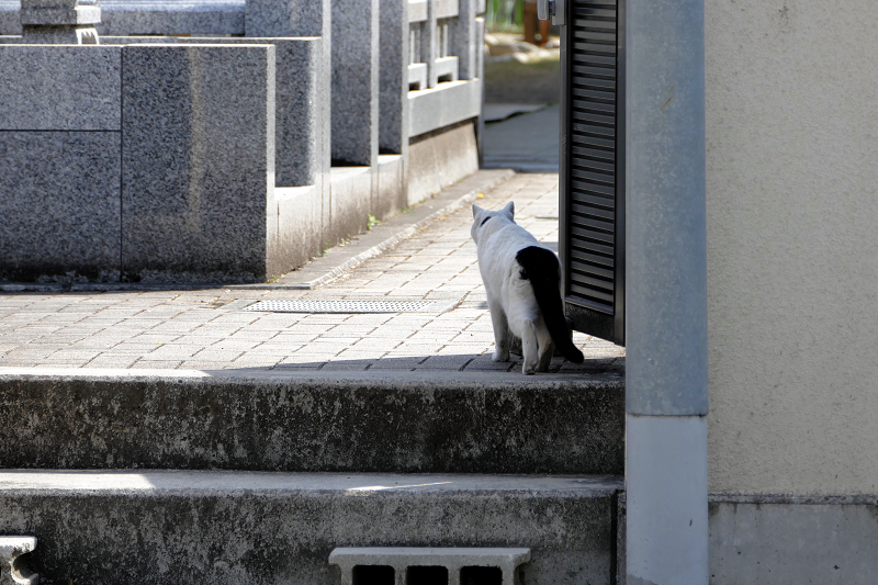 墓苑入口白黒猫2