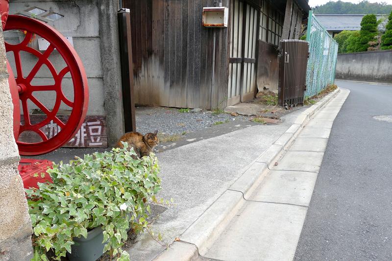 裏通りのサビ柄猫2