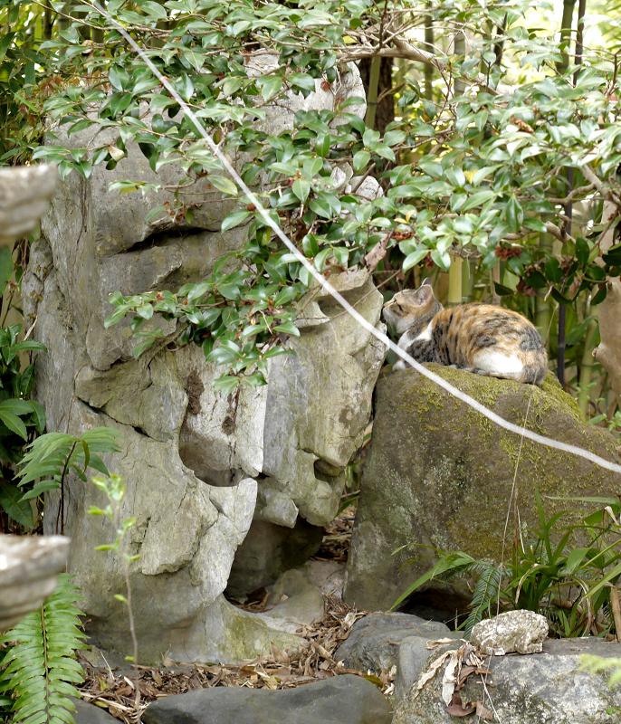 石庭の三毛猫2