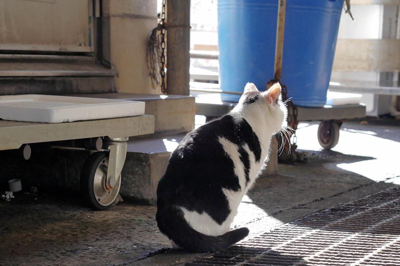 陽射しを浴びて座る白黒猫3
