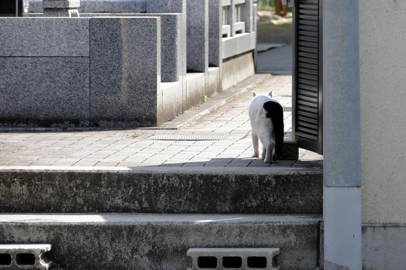 墓苑入口白黒猫3