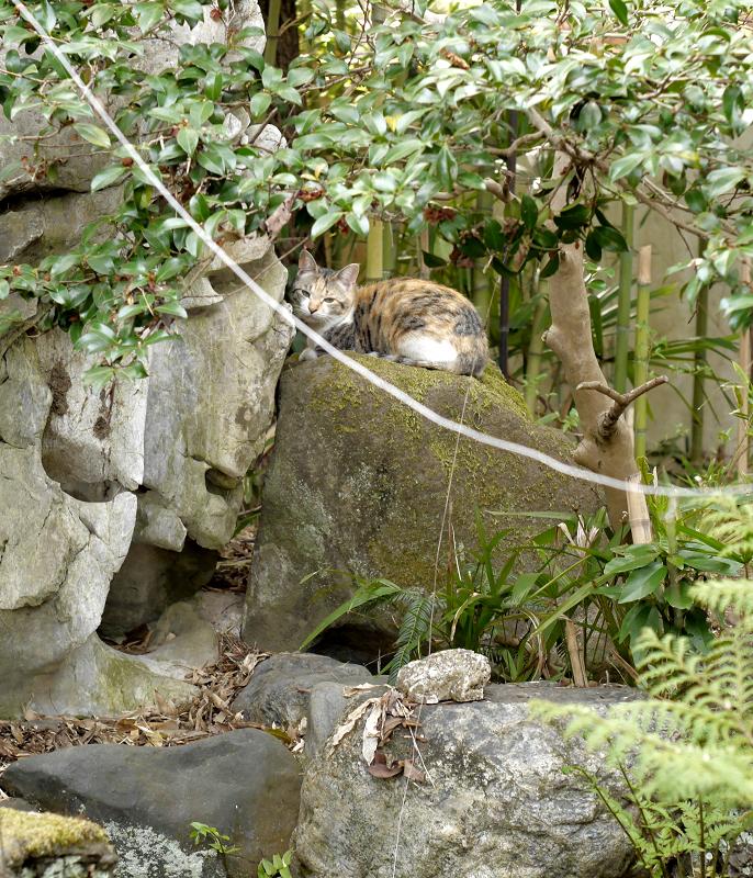 石庭の三毛猫3