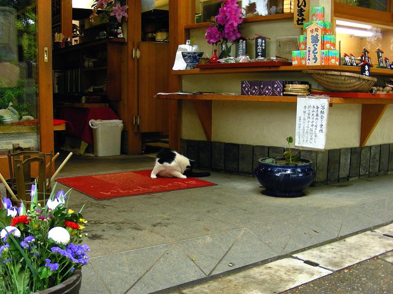 食事処の黒白猫1
