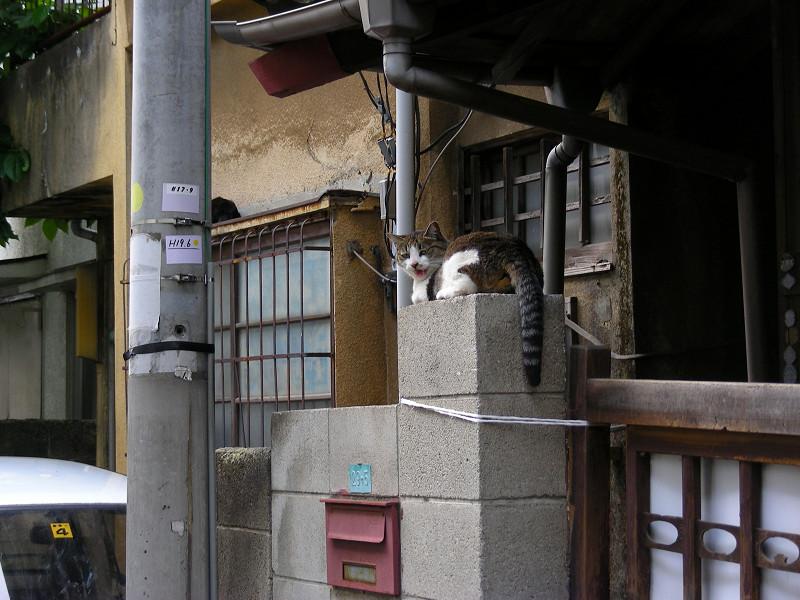 玄関先の猫たち1