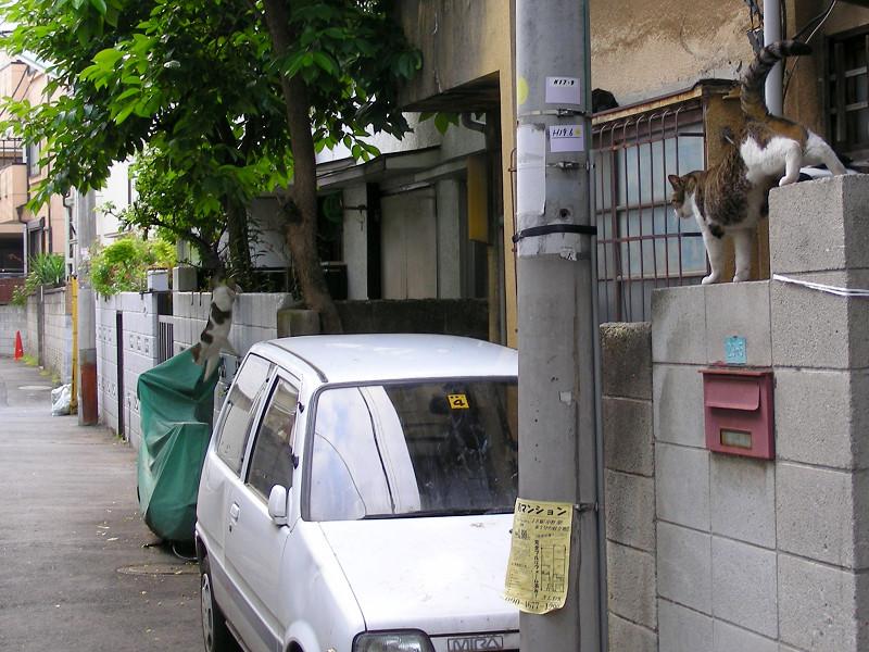 玄関先の猫たち2
