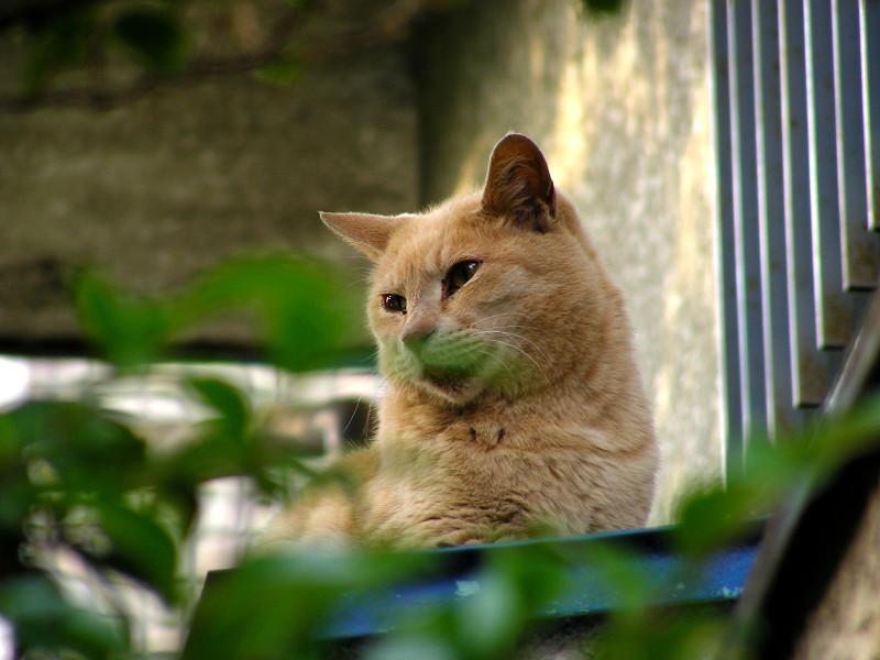 見上げた先の茶トラ猫2