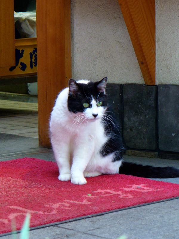 食事処の黒白猫2