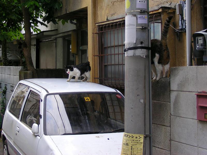 玄関先の猫たち3