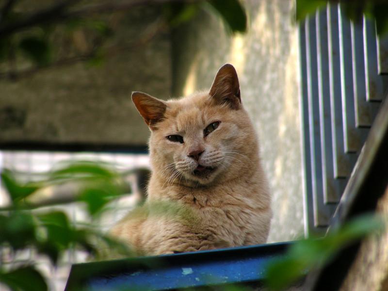 見上げた先の茶トラ猫3
