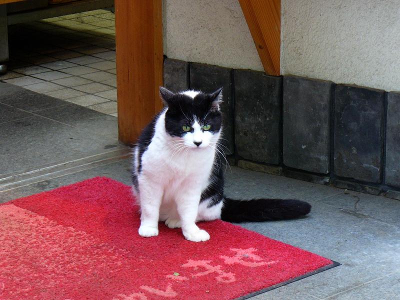 食事処の黒白猫3