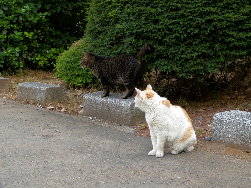 縁石の猫2匹1